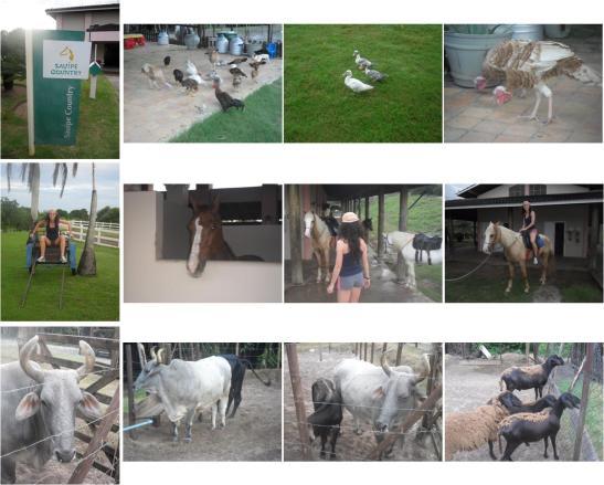 A Fazendinha - uma mini fazenda com todos os animais típicos de uma quinta, incluindo a Pastora - eu!